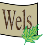 Gemeindeinfo der Gemeinde Wels ab 2013